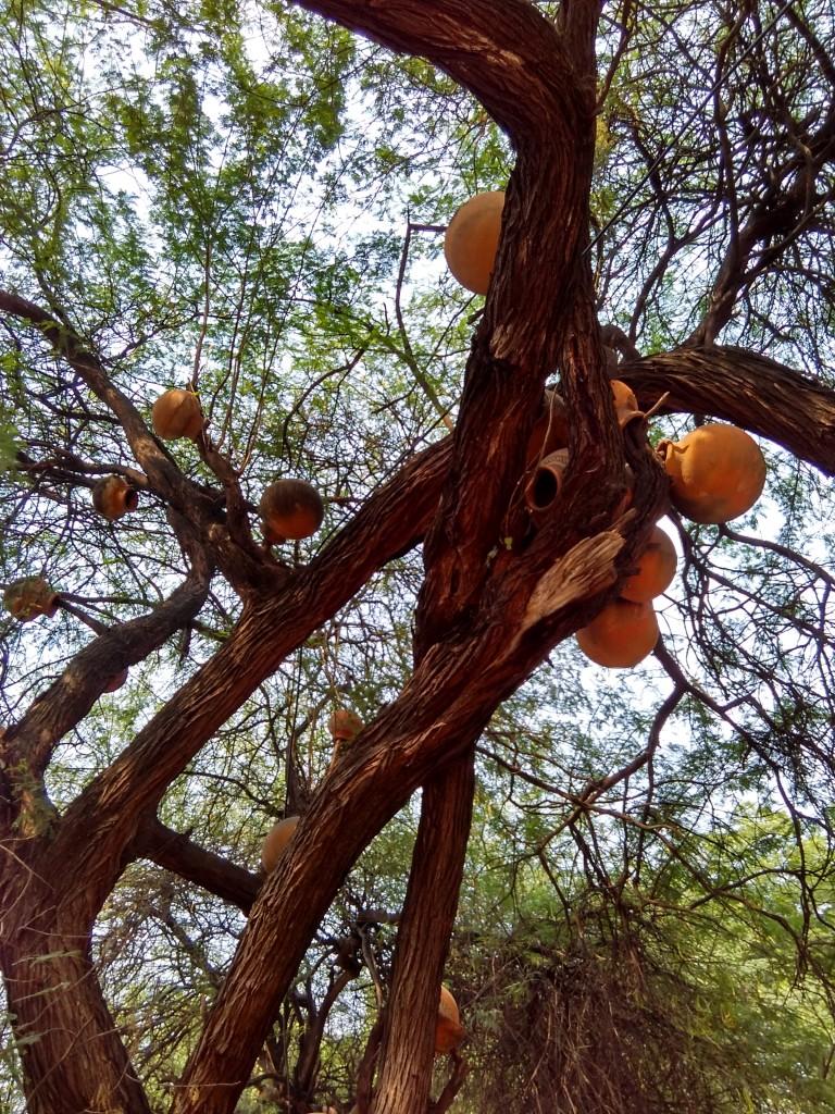 Matka Peer on Trees